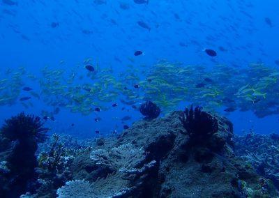 Dawera, Forgotten Islands