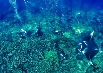 Snorkeling with mantas