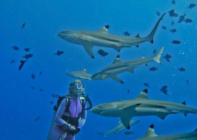 Valerie Taylor with Black tip sharks