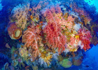 Diving at Tayandu
