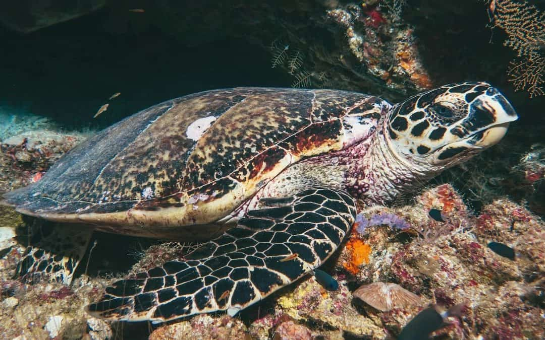 Turtle, Lucipara Island